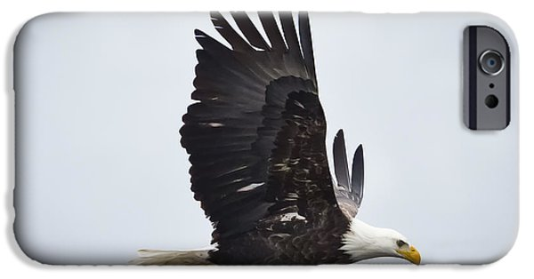 Bald Eagle IPhone 6s Case by Ricky L Jones