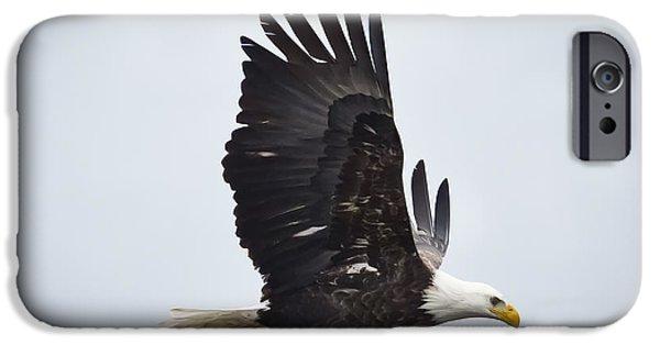 Bald Eagle IPhone 6s Case