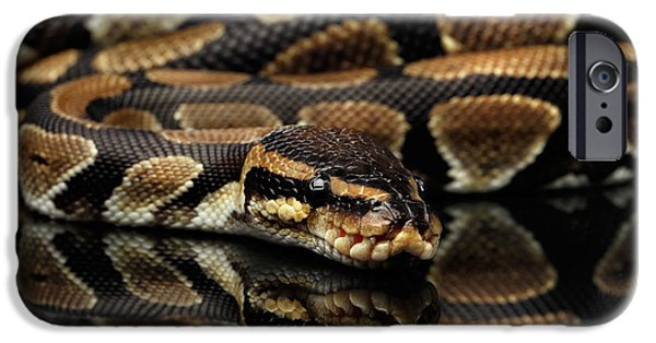 Ball Or Royal Python Snake On Isolated Black Background IPhone 6s Case