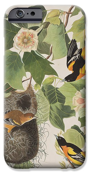 Baltimore Oriole IPhone 6s Case by John James Audubon