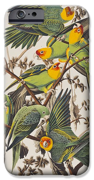Carolina Parrot IPhone 6s Case by John James Audubon