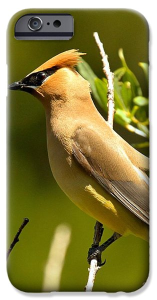 Cedar Waxwing Closeup IPhone 6s Case by Adam Jewell