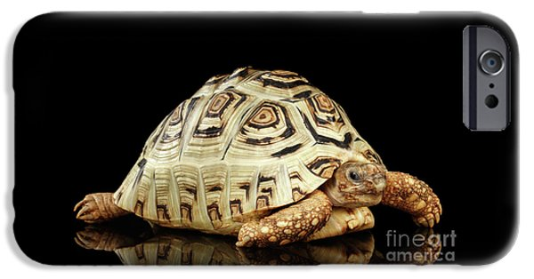 Closeup Leopard Tortoise Albino,stigmochelys Pardalis Turtle With White Shell On Isolated Black Back IPhone 6s Case