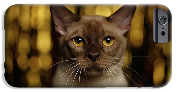 Cat iPhone 6s Case - Closeup Portrait Burmese Cat On Happy New Year Background by Sergey Taran