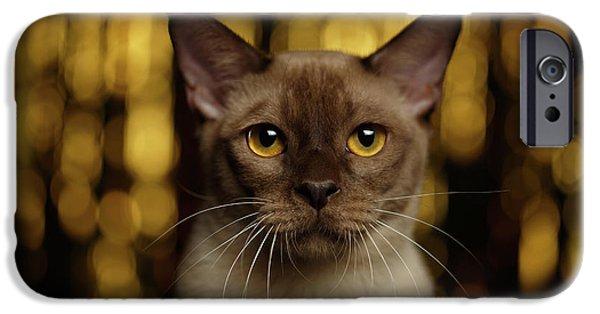 Cat iPhone 6s Case - Closeup Portrait Burmese Cat On Happy New Year Background by Sergey Taran