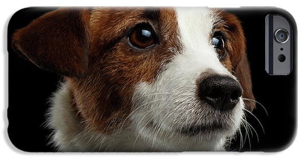 Closeup Portrait Of Jack Russell Terrier Dog On Black IPhone 6s Case by Sergey Taran