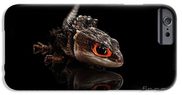 Closeup Red-eyed Crocodile Skink, Tribolonotus Gracilis, Isolated On Black Background IPhone 6s Case by Sergey Taran