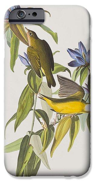 Connecticut Warbler IPhone 6s Case by John James Audubon