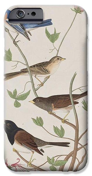 Finches IPhone 6s Case by John James Audubon