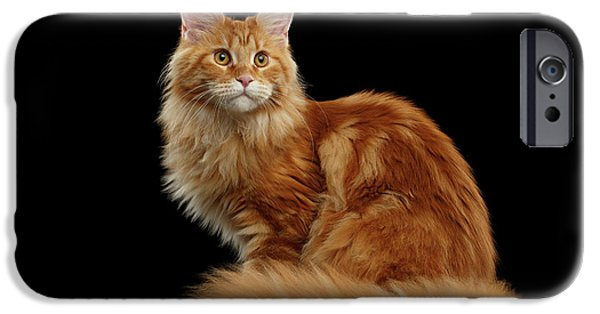 Cat iPhone 6s Case - Ginger Maine Coon Cat Isolated On Black Background by Sergey Taran