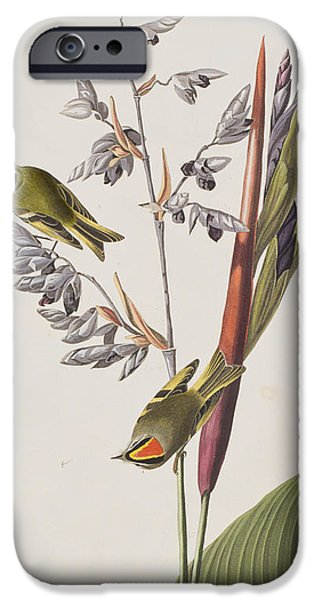 Golden-crested Wren IPhone 6s Case by John James Audubon