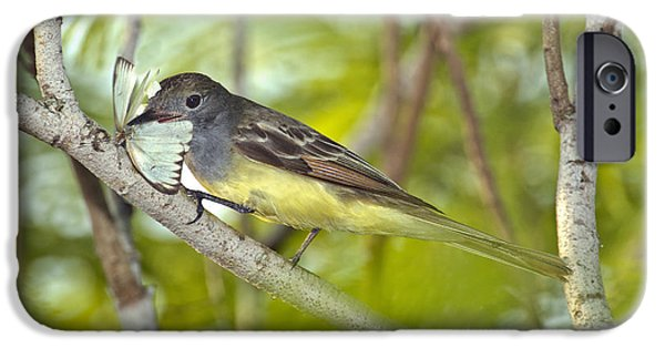 Great Crested Flycatcher IPhone 6s Case by Anthony Mercieca