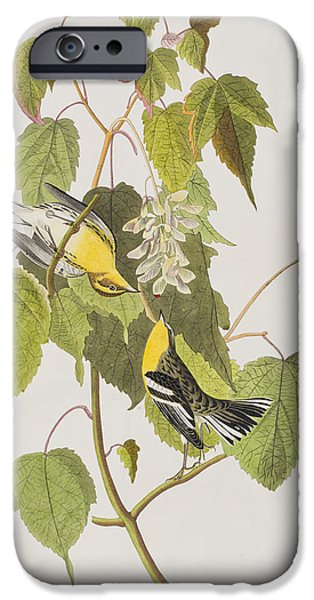 Hemlock Warbler IPhone 6s Case by John James Audubon