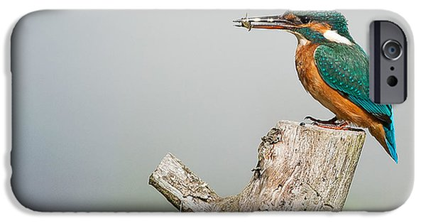 Animals iPhone 6s Case - Kingfisher by Paul Neville