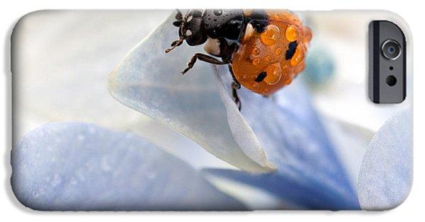 Animals iPhone 6s Case - Ladybug by Nailia Schwarz