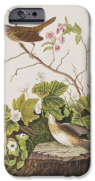 Lincoln Finch IPhone 6s Case by John James Audubon