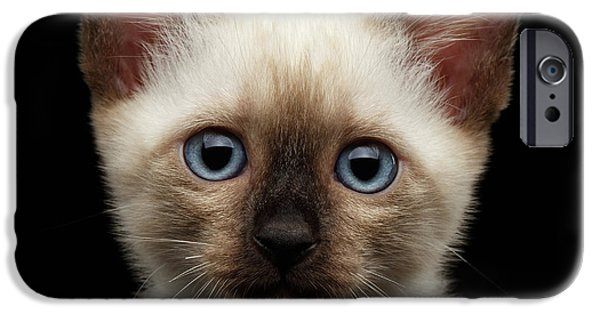 Cat iPhone 6s Case - Mekong Bobtail Kitty With Blue Eyes On Isolated Black Background by Sergey Taran