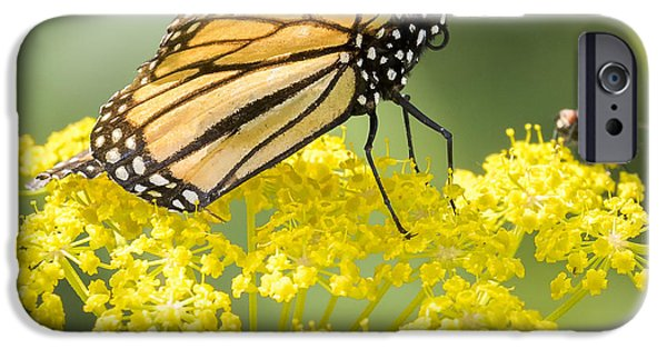 Monarch Butterfly IPhone 6s Case by Ricky L Jones