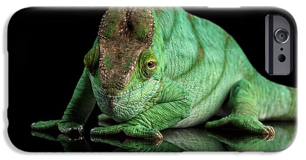 Parson Chameleon, Calumma Parsoni Orange Eye On Black IPhone 6s Case by Sergey Taran