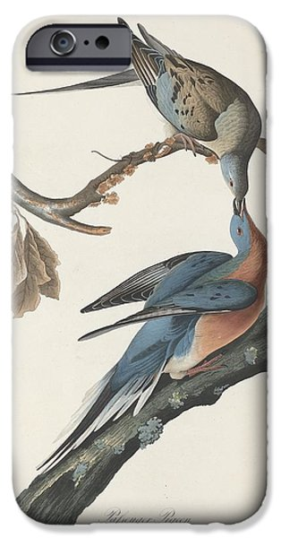 Passenger Pigeon IPhone 6s Case by Rob Dreyer