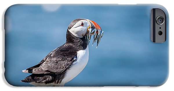 Puffin iPhone 6s Case - Puffin With Fish For Tea by Anita Nicholson