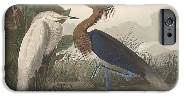 Ibis iPhone 6s Case - Purple Heron by Dreyer Wildlife Print Collections