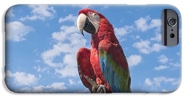 Scarlet iPhone 6s Case - Scarlet Macaw by Kim Hojnacki