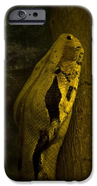 Snake IPhone 6s Case