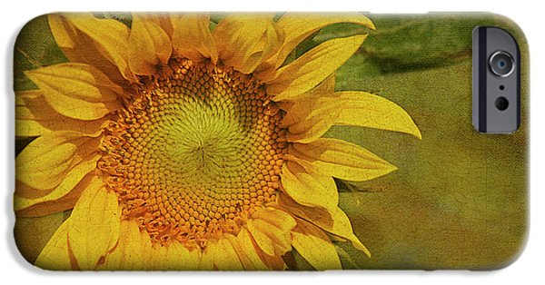 Sunflower iPhone 6s Case - Sunflower by Cindi Ressler