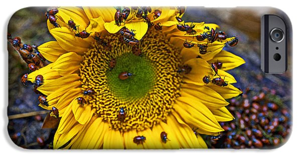Sunflower Covered In Ladybugs IPhone 6s Case