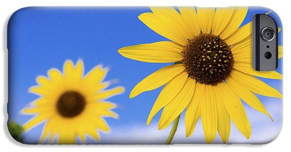 Sunflower iPhone 6s Case - Sunshine by Chad Dutson