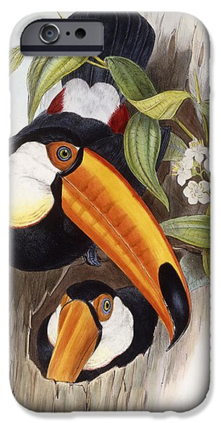 Toucan iPhone 6s Case - Toucan by John Gould