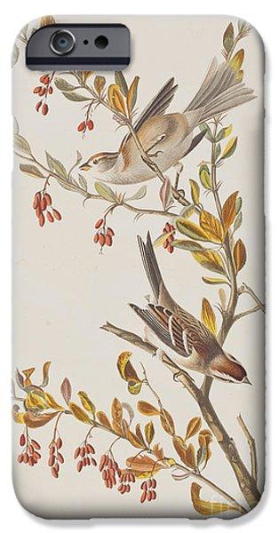 Tree Sparrow IPhone 6s Case by John James Audubon