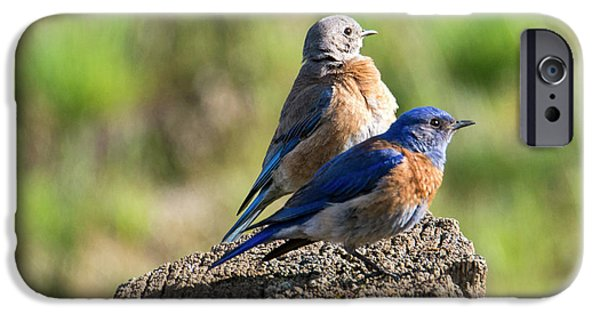 Western Bluebird Pair IPhone 6s Case
