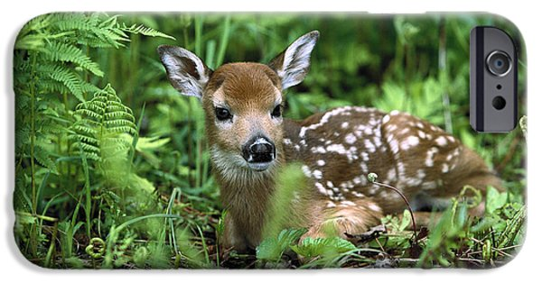 White-tailed Deer Odocoileus IPhone 6s Case by Konrad Wothe