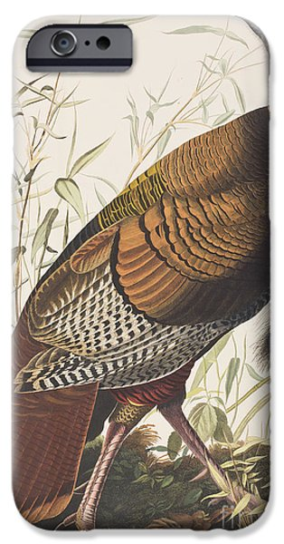Wild Turkey IPhone 6s Case by John James Audubon