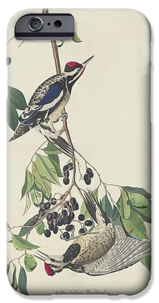 Yellow-bellied Woodpecker IPhone Case by John James Audubon