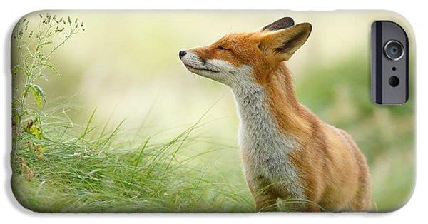 Animals iPhone 6s Case - Zen Fox Series - Zen Fox by Roeselien Raimond