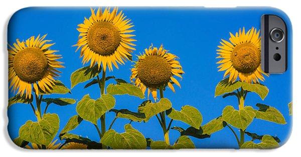 Sunflower iPhone 6s Case - Field Of Sunflowers by Bernard Jaubert