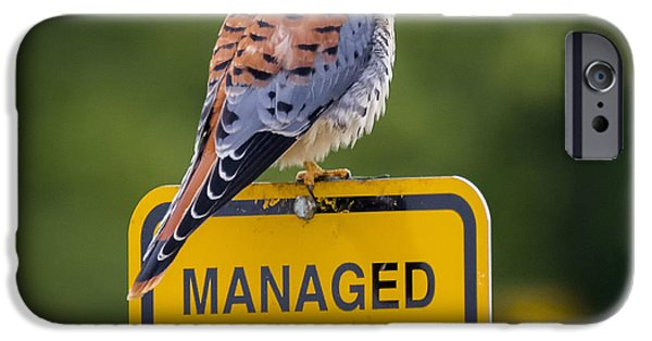 American Kestrel IPhone 6s Case by Ricky L Jones