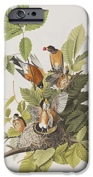 American Robin IPhone 6s Case by John James Audubon