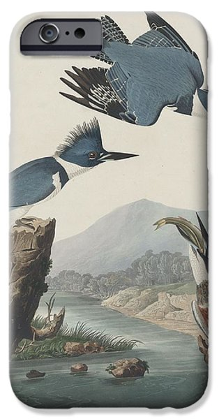 Belted Kingfisher IPhone 6s Case by Anton Oreshkin