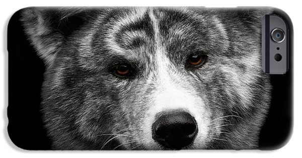Closeup Portrait Of Akita Inu Dog On Isolated Black Background IPhone 6s Case