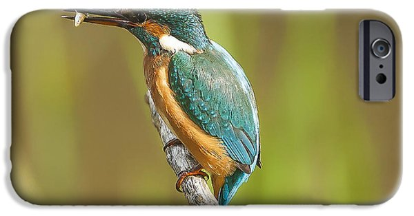 Kingfisher IPhone 6s Case by Paul Neville