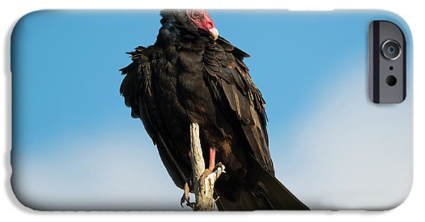 Buzzard iPhone 6s Case - Looking For A Meal by Mike Dawson