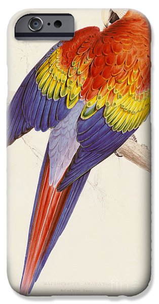 Red And Yellow Macaw IPhone 6s Case by Edward Lear