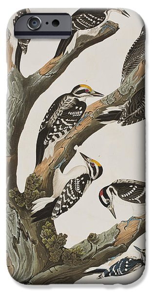 Woodpeckers IPhone 6s Case