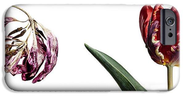 Tulip iPhone 6s Case - Fading Beauty by Nailia Schwarz