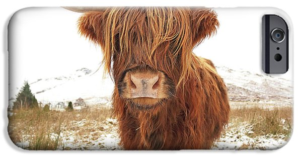 Cow iPhone 6s Case - Highland Cow by Grant Glendinning