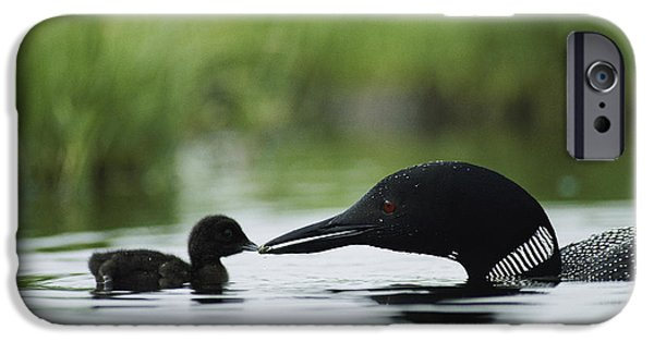 Loon iPhone 6s Case - Loons by Michael S Quinton